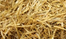 Nature's Cafe Straw Bedding 24oz
