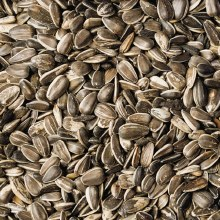 Volkman Black Stripe Sunflower Seed 40lb