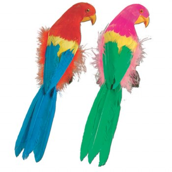 Parrot Feathered 12 in