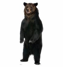 Brown Bear Talking