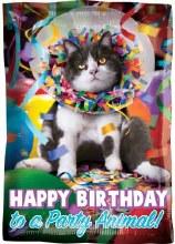 """Happy Birthday Party Animal Cat ~ 17"""""""