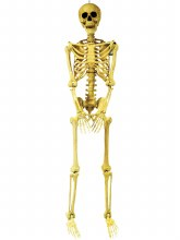 Skeleton Pose & Hold 5ft