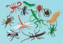 Insect Favors 12pk