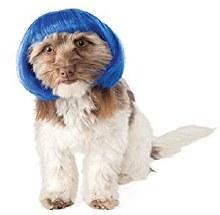 Wig Pet Blue Bob S/M