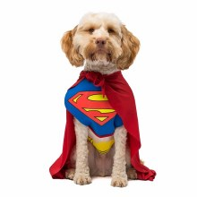 Superman Pet XXL