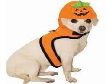 Jack O Lantern Pet Harness MED