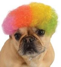 Wig Pet Afro