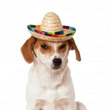 Hat Pet Sombrero S/M
