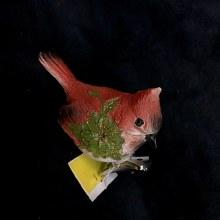 Little Red Bird Clip