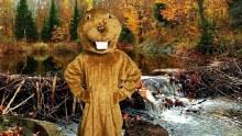 Beaver Mascot Rental