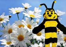 Bee Mascot Rental