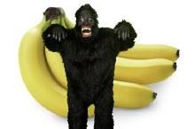 Rental Gorilla Suit Adult