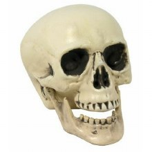 Skull Propm w/ Moving Jaw