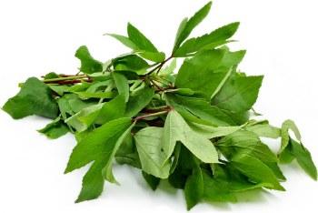 Gangura Leaves / Lb