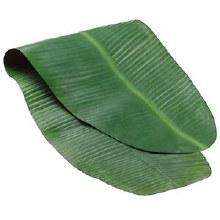 Banana Leaf  Big /ea