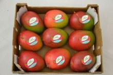 Kent: Mango Box