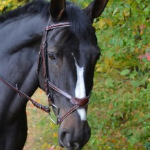 Chase Figure 8 Bridle