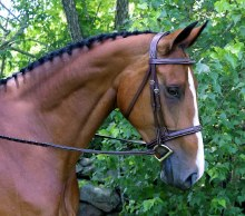 Red Barn Synergy Bridle