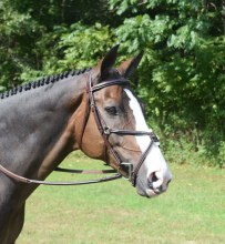 Red Barn Equinox Bridle