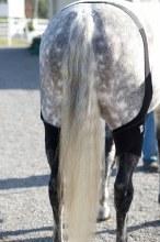 Ice Horse Stifle Wraps Pair