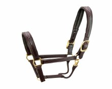 Walsh Fancy Padded Halter