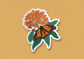 "Monarch Milkweed Sticker 3""x2.75"""