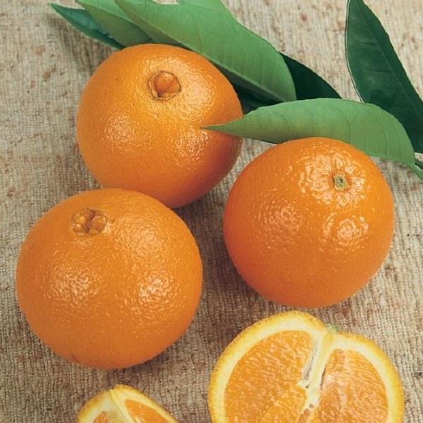 Orange Juicing Navel 1kg
