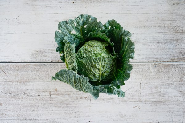 Organic Savoy Cabbage  Whole