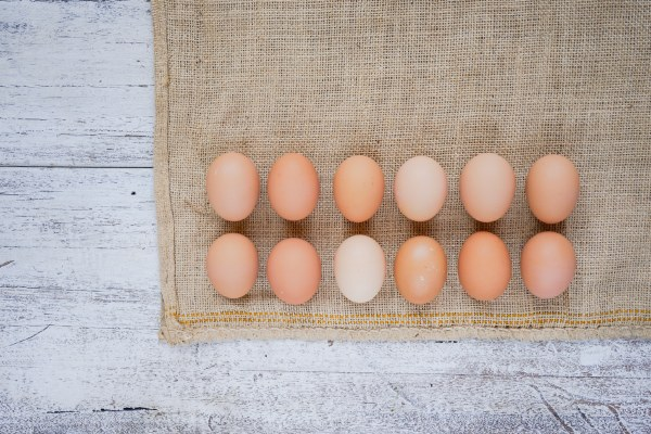 Organic Free Range Extra Large Eggs