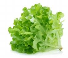 Lettuce Green Oak Each