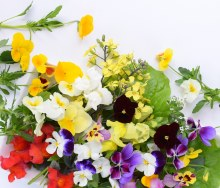 Edible Flowers 10g Punnet