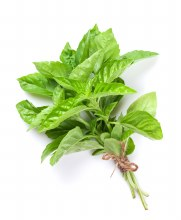 Herb Basil Bunch
