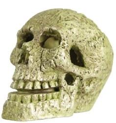 Glofish Skull Ornament Sm