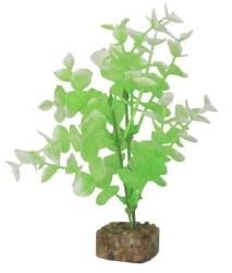 Glofish Grn/Wht Plant Md