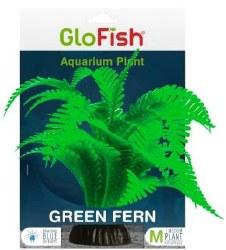 Glofish Green Fern Md