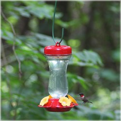 Top Fill Glass Hummingbird Fdr