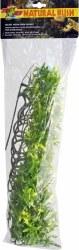 Plant Bolivian Croton Lg Green