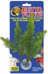 Salvia Betta Plant