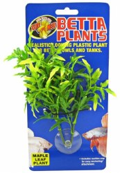 Maple Leaf Betta Plant