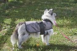 Arctic Coat Grey Xsmall
