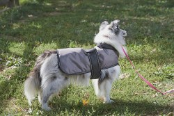 Arctic Coat Grey Small