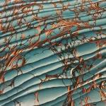 Ann Muir Archive Marble 11