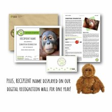 Limited Edition World Orangutan Day Special Package