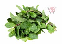 Mint Leaves - Ea
