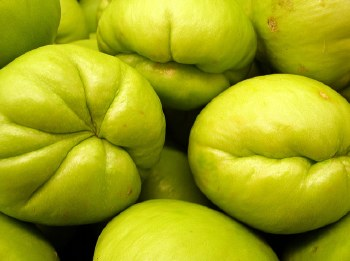 CHAYOTE SQUASH BY COUNT