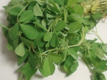 METHI LEAVES BY COUNT