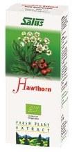 Hawthorn Plant Juice