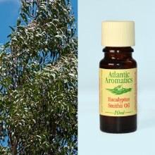 Eucalyptus Smithii Oil