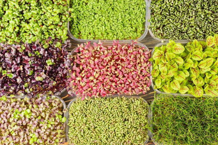 Microgreen Mixed Crate - 14th Nov Collection