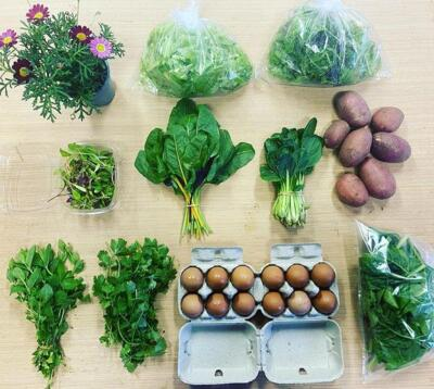 Summer CSA (20 Weeks) - 50% Now / 50% Later